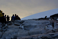 Aliens and Adelie penguin - Petermann Island